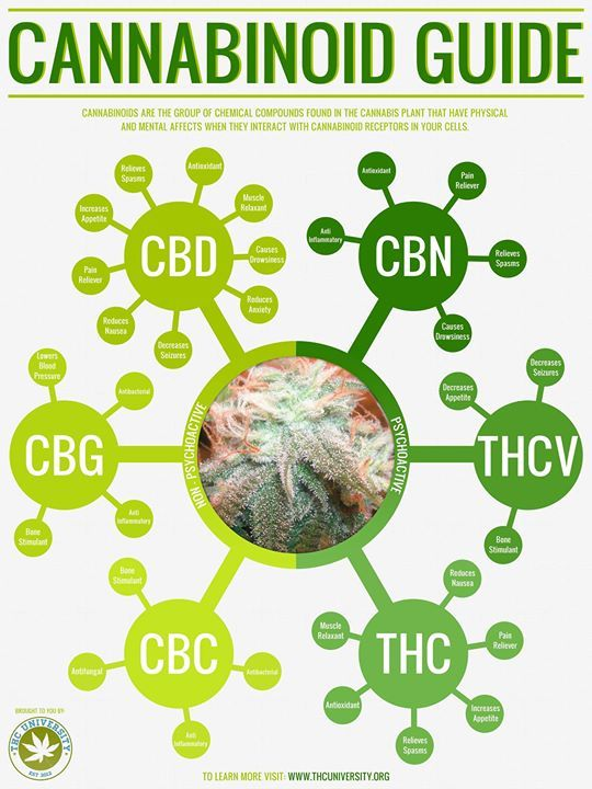 A very cool interactive Cannabinoid guide. http://insider.thcuniversity.org/cannabinoids/
