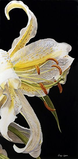 Lily by Cindy Agan Watercolor ~ x