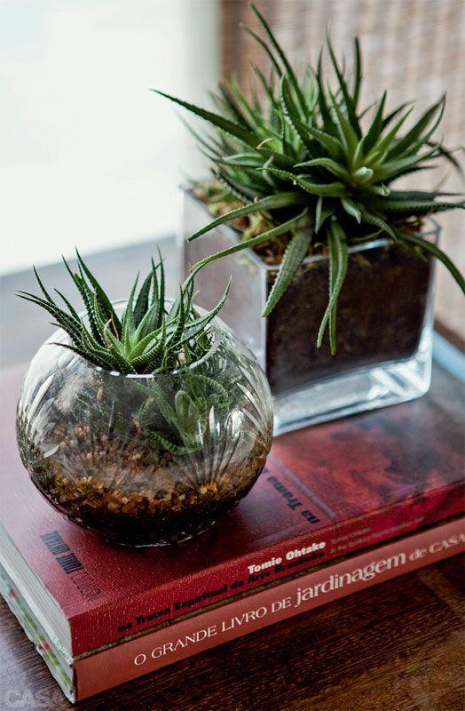 Plantas dentro de casa: quais são as espécies ideais - Casa: