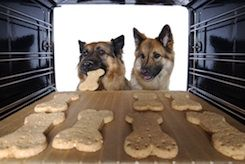 If you are like most dog owners your 4-legged friend is part of the family and as such you might want to make him some treats.