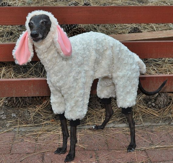 Woof In Sheep's Clothing Dog Costume by RebelWag on Etsy