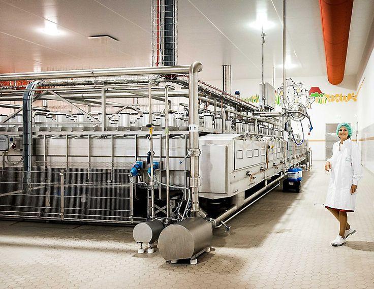 Королева Максима посетила молочную ферму: ru_royalty