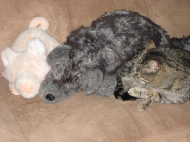 Find the kitteh.