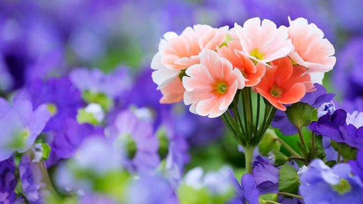 Latest flores2by2bflowers2bby2bwww-bancodeimagenesgratuitas-com-1.jpg (1600×900) 3