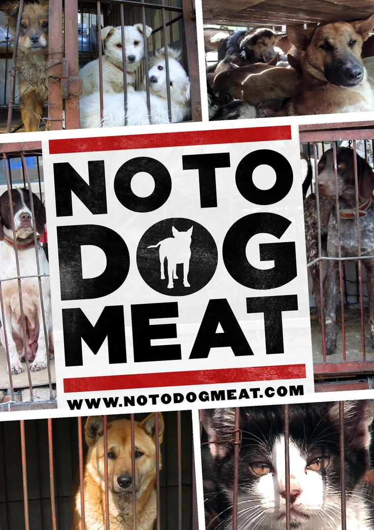 Adopt Dog Meat Trade Uk