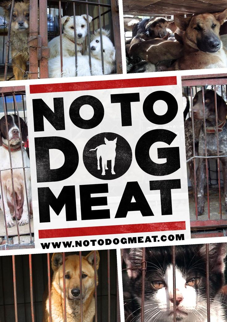 Korean Dog Breed For Eating Save