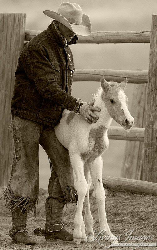 Cowboy Steadies Foal II  Fine Art Horse by Carol Walker www.LivingImagesCJW.com