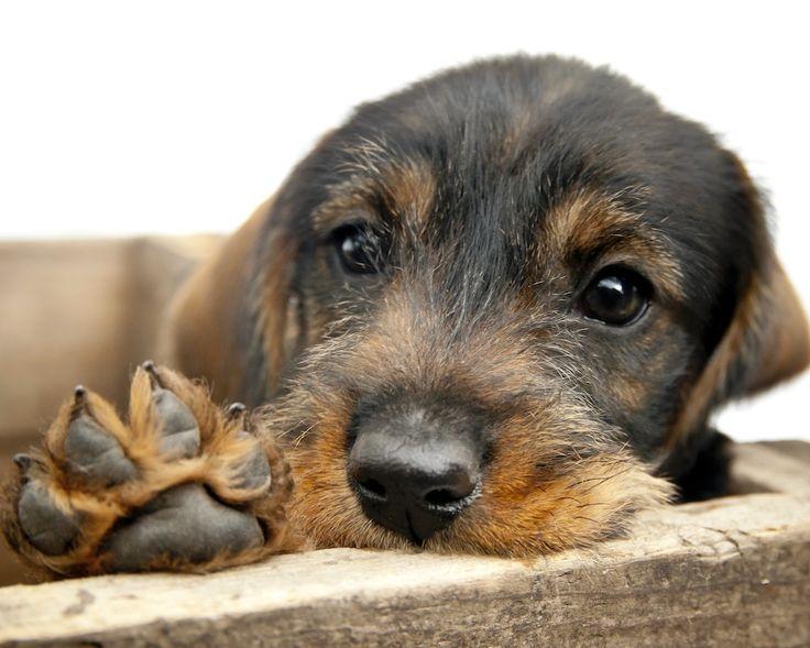 Förutom att titta på själva miljön där hundarna vistas – både inomhus och utomhus – är det bra att ställa en rad frågor till personalen på hunddagiset.
