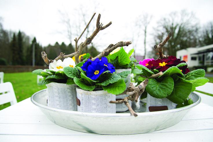 cute plants in cute pots!