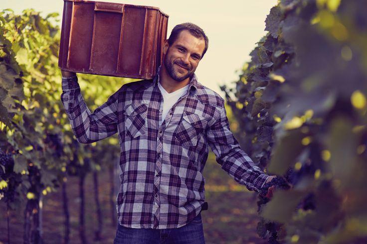 Gracias al trabajo de los viticultores podemos disfrutar del vino durante todo el año