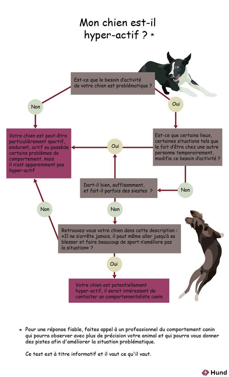 test : mon chien est il hyperactif ?
