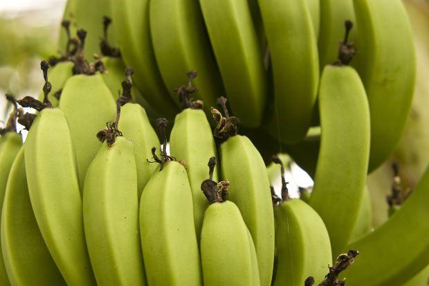 Mindenhez használható a zöld banán liszt.  http://glutenmentes-paleoliszt.hu/gy-i-k/