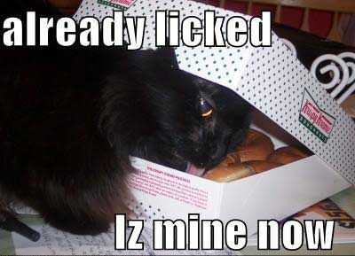 lolcat licking a donut in a box. | Cats and Kittens ...