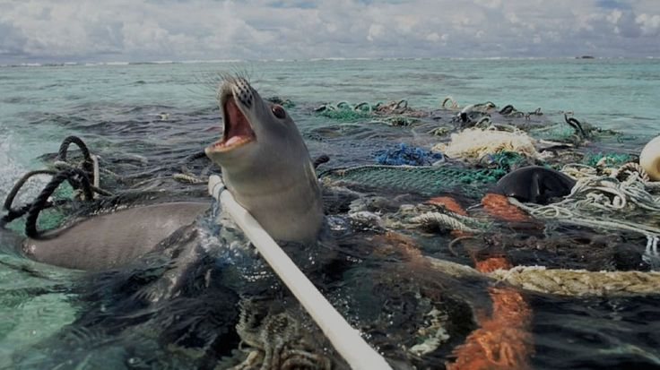 phoque-plastique - un animal marin coincé entre des déchet