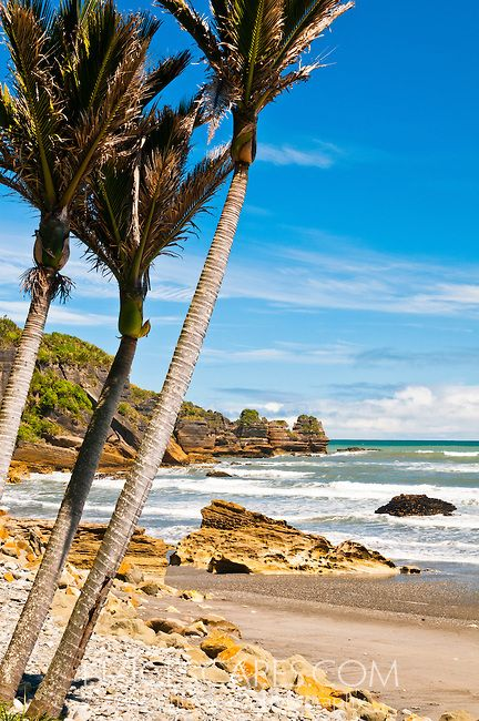 Nikau palms and rocky coast in Punakaiki, Paparoa NP, West Coast, New Zealand