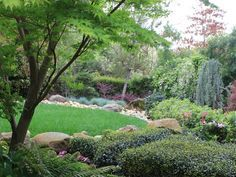 Lush Garden Oasis - Refined Asian Garden on HGTV; note the dwarf hollies, complimenting the weeping blue cedar.