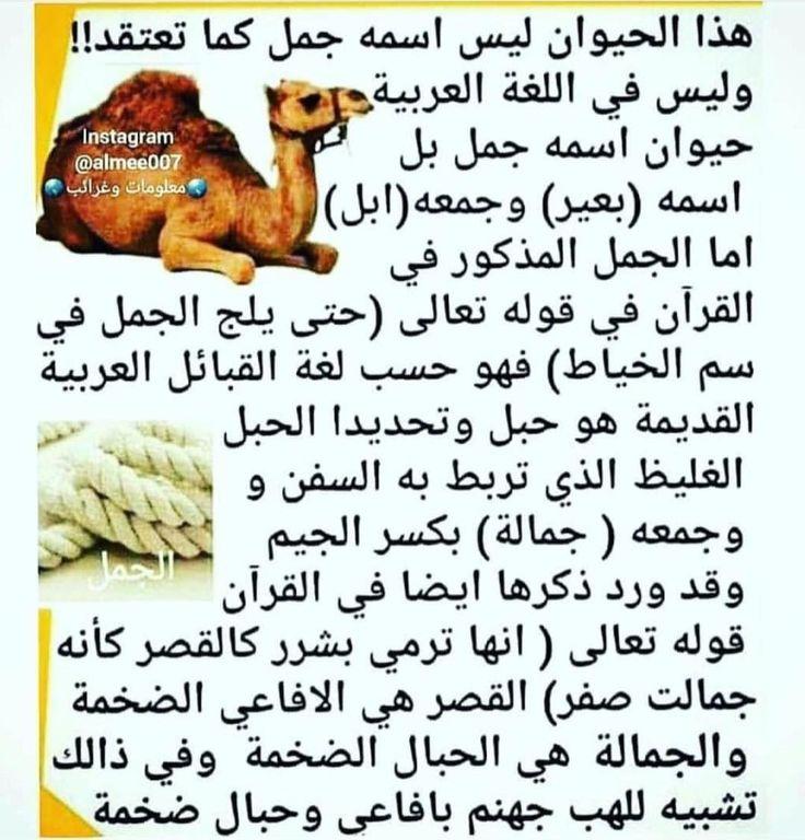 Pin By Amal El Saied On اللغة العربية Arabic Proverb Arabic Poetry Arabic Quotes