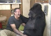 """Remembering Robin Williams And His """"Unforgettable"""" Bond With Koko The Gorilla"""