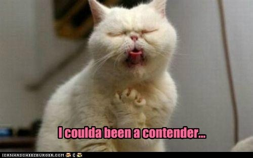 I coulda been a contender: Operacat, Whitney Houston, Animal Humor, Funny Pictures, Funny Cat, Opera Cat, Funny Animal, So Funny, Cat Memes