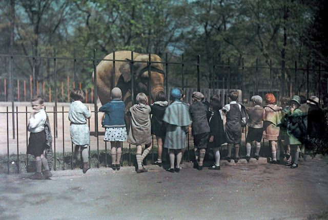 vintage everyday: Children looking at an elephant at the National Zoo, Washington, DC, 1930