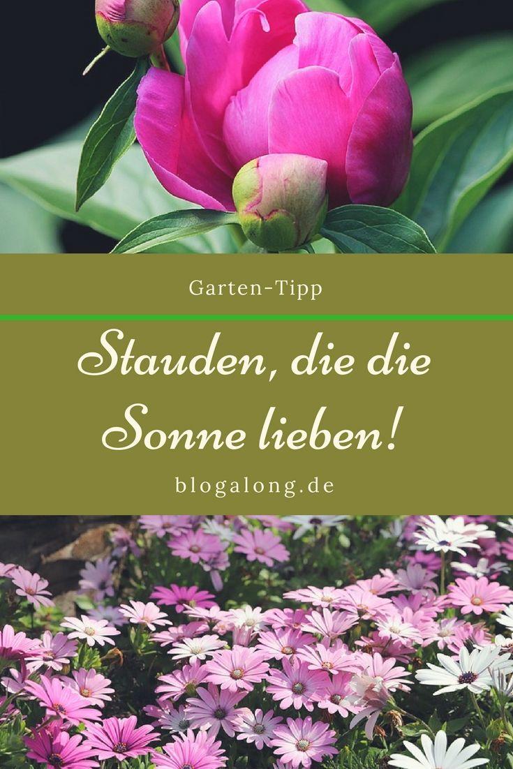 Prächtig Hitzebeständige Pflanzen, die die Sonne lieben | Garten #FO_62