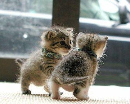 Tiny tots. by Mopar Mo