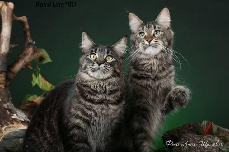Отличные котята