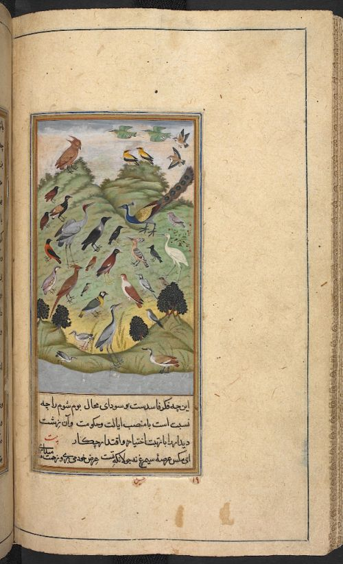 The fables owe their origin to India where they are best known in Sanskrit as the Panchatantra, but it was largely through the Arabic translation by Ibn al-Muqaffāʻ (died c. 757) that they became so popular in Persian. The story describes how the Sasanian king of Iran, Anushirvan (Khusraw I, r. 531-579), heard of a book treasured by the kings of India which had been compiled from the speech of animals, birds, reptiles and wild beasts.