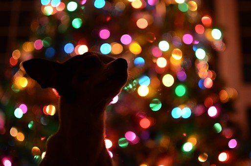 Dog, Christmas Tree, Dark, Lights