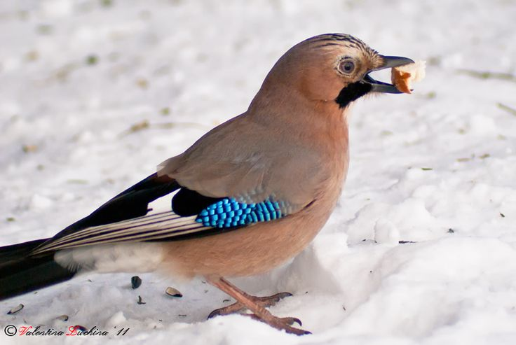 Картинки по запросу кормушки для птиц зимой
