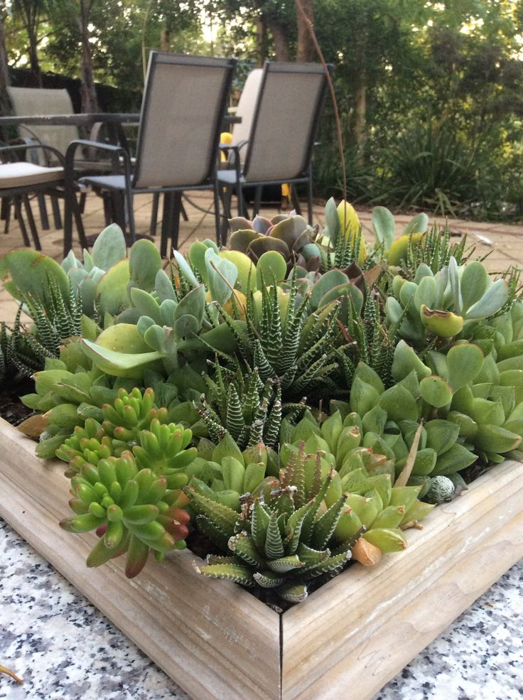 Succulent centre piece
