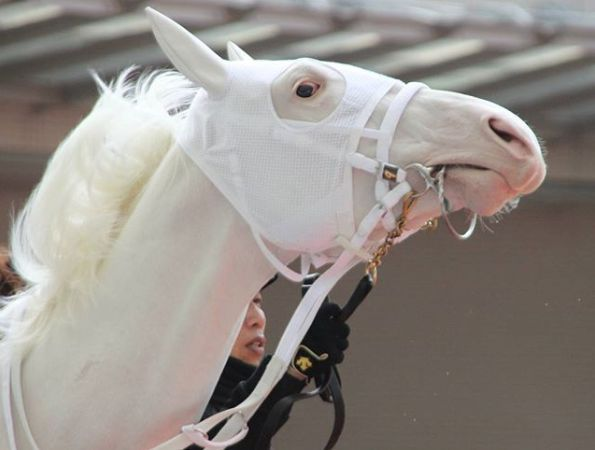 White Thoroughbred Racehorse Visit Our Etsy Shop For Model Horse