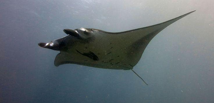 Safari :: Baliku Amed Bali Diving - East Bali
