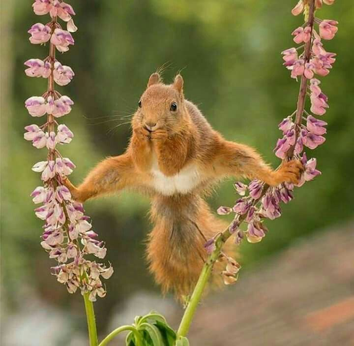 Squirrel yoga