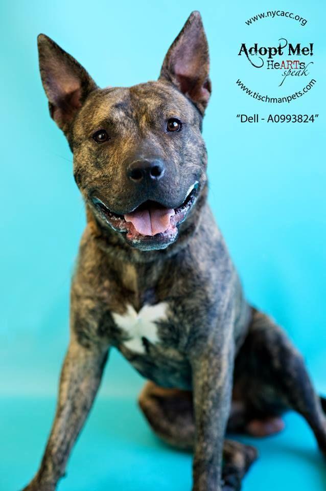 Manhattan Dog Adoption Center
