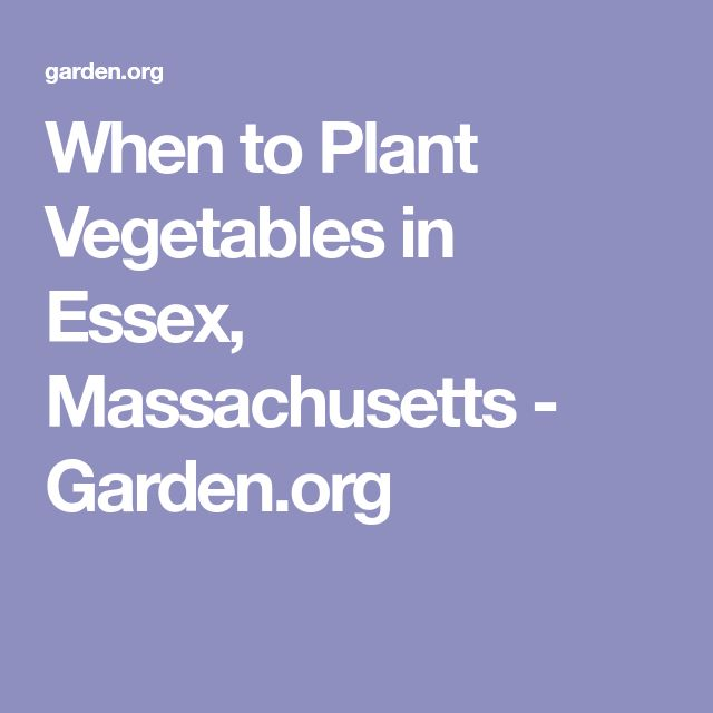 When to Plant Vegetables in Essex, Massachusetts - Garden.org