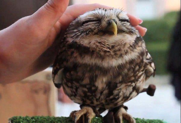 Baby Owl, so cute.