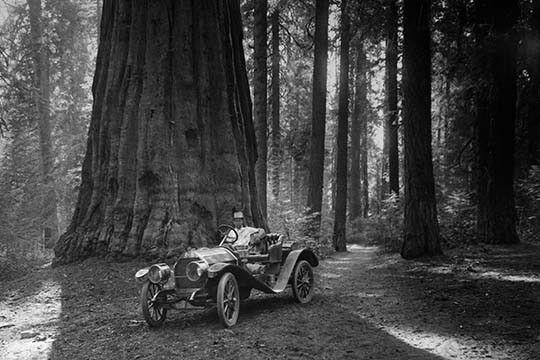 Best Hotels Near Sequoia National Park