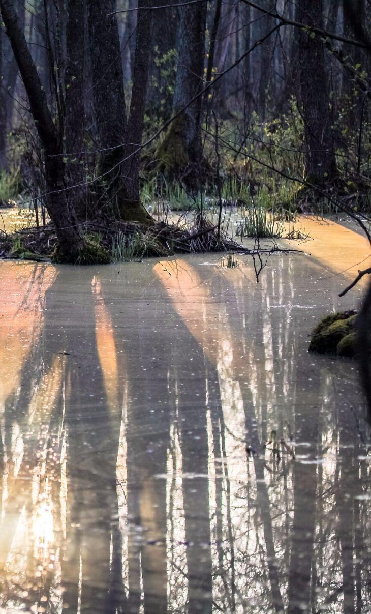 Wiosenna Biebrza / Spring time in Biebrza National Park, Poland