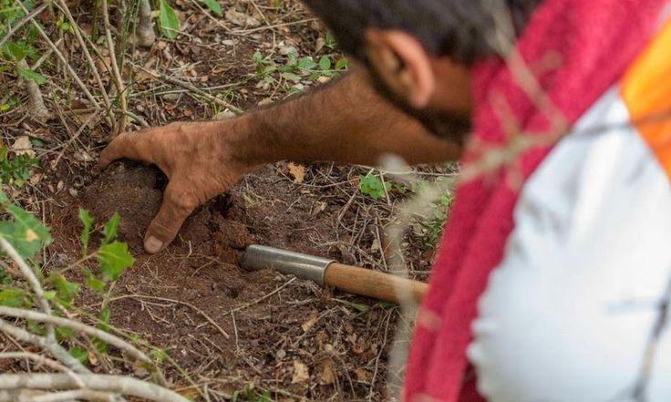 Κυνηγώντας στα δάση της Θράκης έναν κρυμμένο θησαυρό http://ift.tt/2sKvvWc