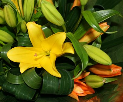 Bloomin Boxes :: Lilliums