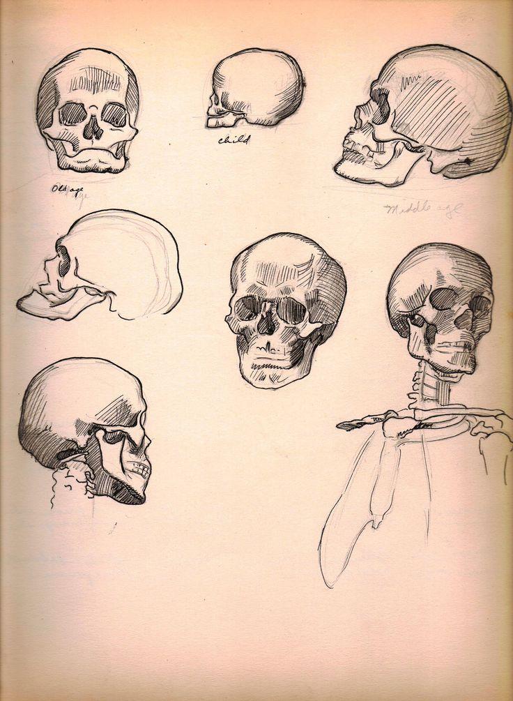 Anatomy sketches (skulls) by Harry E. Stinson.