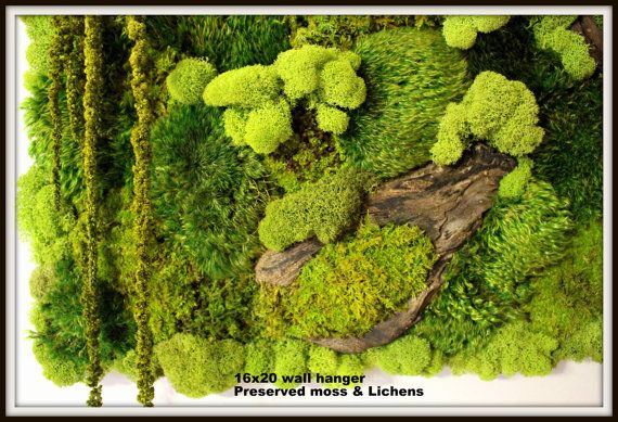 Real Moss Wall Art-16x20 moss frame-Moss Wall by teresab123