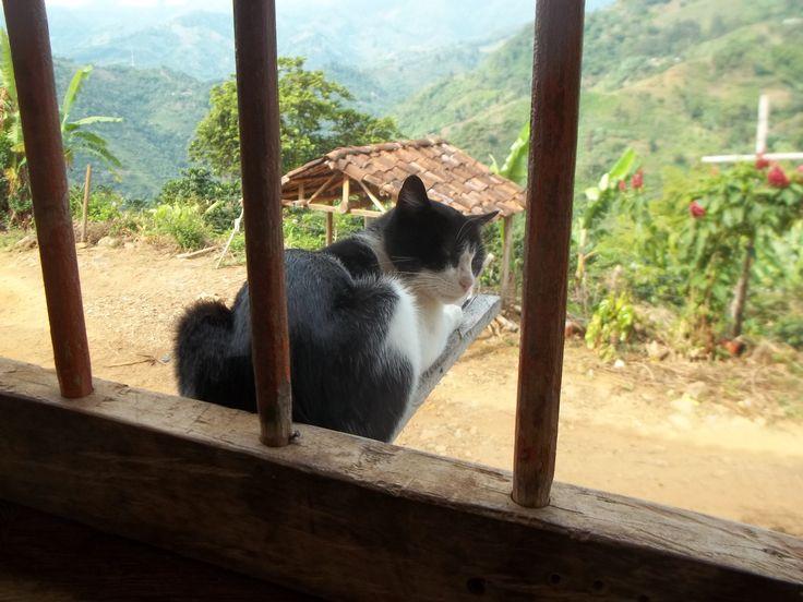 Este gato descansa en una tabla suspendida en el vacío, en medio de un paisaje rural hermoso. Vereda de Alto Cáceres.