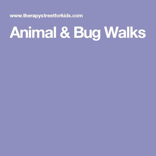 Animal & Bug Walks