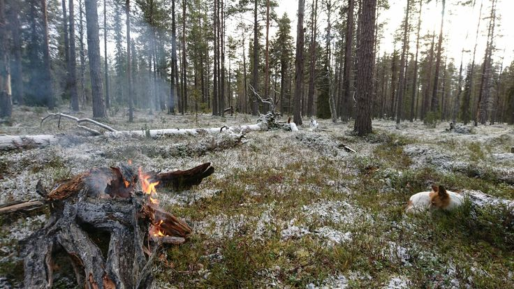 Break during a hunting day in Finnish Lapland