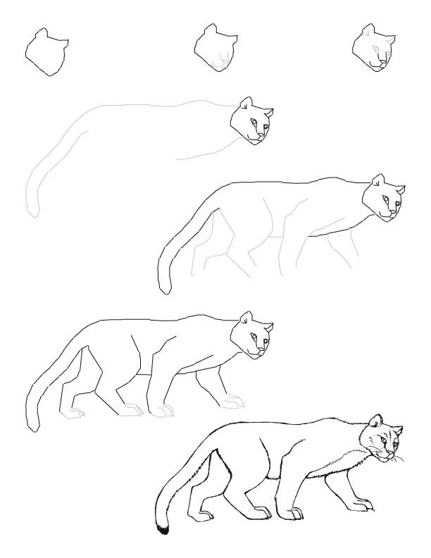 Cougar Face Line Drawing : Mountain lion drawing lesson art lessons