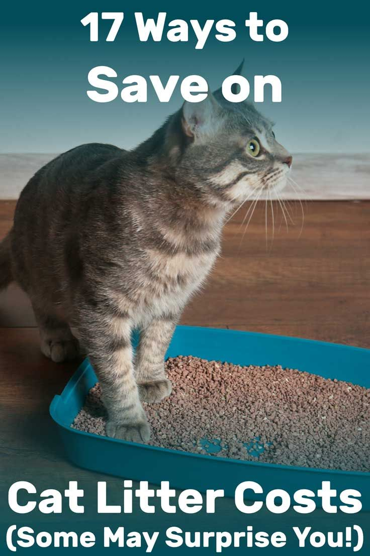 17 Ways To Save On Cat Litter Costs Some May Surprise You Litter Boxes Com In 2020 Cheap Cat Litter Cat Litter Cats
