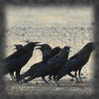 L'esprit totem du Corbeau et le signe de la Balance