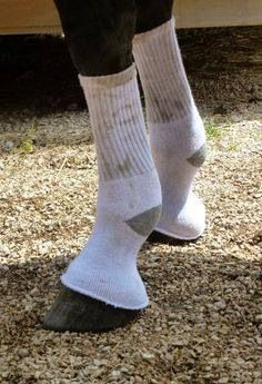 People Socks to help with fly control this summer. You can ever spray them with Fly Spray. I'm so trying this. Finally a use for all those holy socks.